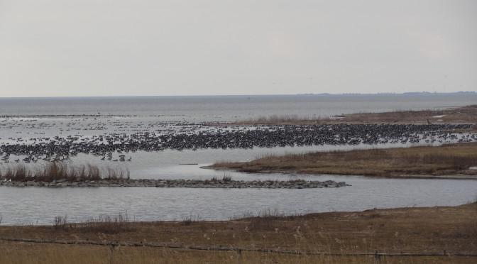 Het natuur en vogelrustgebied Workumerwaard grenst aan het mooie strand van Workum
